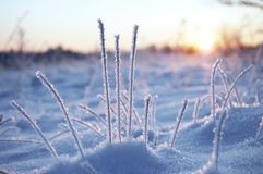 Winter sunrise. Sunrise in a winter field royalty free stock images