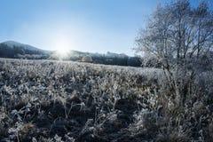Winter sunrise Royalty Free Stock Photos