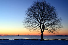 Winter Sunrise. A Winter Sunrise with bare tree on Grand Island, New Hampshire Royalty Free Stock Images