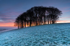 Winter Sunrise Stock Images