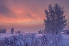 Winter sunrise. Colorful winter scene. Frosty trees on snowy meadow at dawn. Christmas background. Winter morning nature stock photos