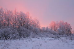 Winter sunrise. In the countryside in pink tones Royalty Free Stock Photography