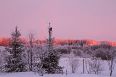 Winter sunrise. In the countryside in pink tones Stock Photos