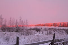 Winter sunrise. In the countryside in pink tones Royalty Free Stock Photos