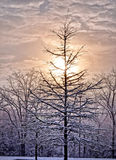 Winter Sunrise. An early morning winter sunrise Royalty Free Stock Photos