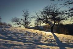 Winter sunrise forest. SUnrise Winter forest in carpathian mountains Ukraine Stock Image