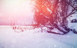 Winter background with sun beams. Royalty Free Stock Photography