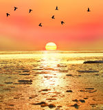 Winter sunrise on a frozen sea. Bright winter sunrise sunset sea. Frozen water, great sun, birds silhouettes on the horizon Stock Photography