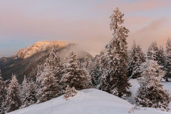 Winter sunrise landscape. Winter sunrise in the Carpathian mountains Stock Photography