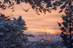 Winter sunrise landscape Stock Photos