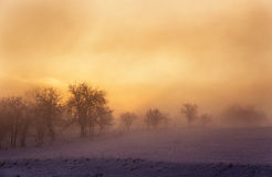 Winter sunrise landscape with fog and tree. Silhouette stock photo