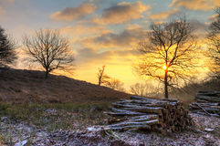 Winter sunrise logs Stock Photo