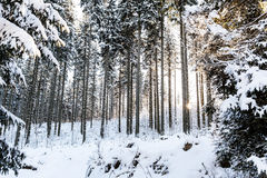 Winter sunrise in mountain forest Royalty Free Stock Images