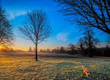 Winter Sunrise at a Park Stock Image