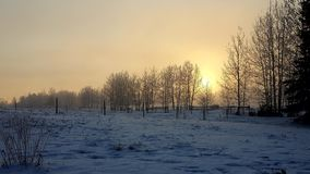 Winter sunrise Snow landscapes. Natural winter landscapes Big old red house, snow and trees firs landscapes Sunrise and swow From Alberta Canada royalty free stock photography