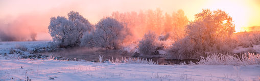 Colorful winter sunrise. Misty winter sunrise. Frozen trees illuminated by rising sun. Beautiful winter sunrise. Stitched panorama Stock Image