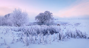 Frozen riverside. Cold winter morning on the lake. Frozen grass and trees Royalty Free Stock Photos