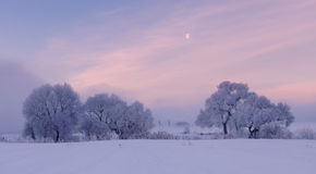 Frozen morning. Cold winter morning. Moon in the sky. Frozen trees Stock Image
