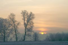 Winter sunrise with trees royalty free stock photo