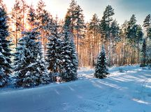 Winter sunrise through the trees. Winter in russian snowboard camp Stock Photo