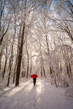 Winter Sunrise Walk Stock Images
