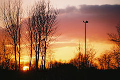 Winter Sunset. Sunset behind winter trees and floodlight Stock Photography