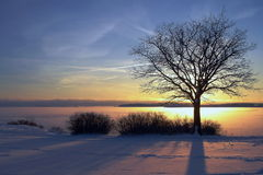 Winter sunset. And the tree Stock Photography