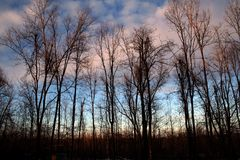 Winter Sunset. The winter sun is setting behind bare trees stock photo