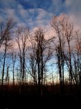 Winter Sunset. A winter sunset is showing behind the bare trees stock image