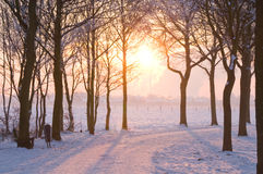 Winter sunset. Scenic winter landscape with sunset trough some trees coming Royalty Free Stock Image