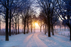 Winter sunset. Scenic winter landscape with sunset trough some trees coming Stock Photo