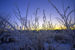 The winter sunset. Stock Images