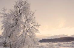 Winter Sunset stock photography