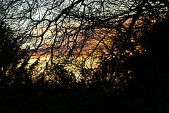 Winter Sunset through beach trees. Bright winter sunset sky through trees in Devon UK royalty free stock images