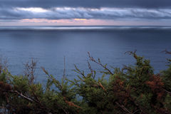 Winter Sunset in Big Sur, with foreground foliage. Quickly moving winter storm clouds sweep above the Pacific Ocean at sunset.  Winter scrub brush of evergreens Stock Photos