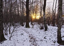 Winter sunset in the city. Sun rays force way through trees of the city park, snow roads, sunset Stock Photo