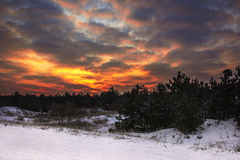 Winter sunset with fiery skies in the snow-covered pine forest Royalty Free Stock Photos