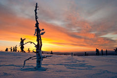 Winter sunset in Finland Royalty Free Stock Photography