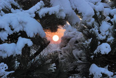Winter sunset in forest Stock Photography