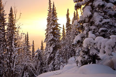 Winter sunset in the forest Stock Image