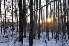 Winter sunset in the forest Stock Photo
