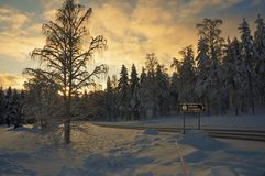 Winter sunset in the forest landscape Royalty Free Stock Photos