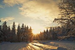 Winter sunset in the forest landscape Royalty Free Stock Images
