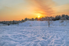 Winter sunset in the forest. Tree near the forest on the background of a winter sunset Stock Photo