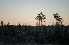 Winter sunset from the forest view, on the field. Otanki, Latvia stock photo