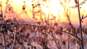Winter sunset stock video footage