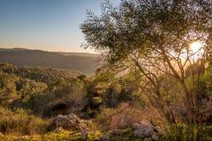 Winter sunset in Israel. Mount Eitan Stock Image