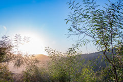 Winter sunset in Israel, mount Eitan. With trees and blue sky Royalty Free Stock Photos