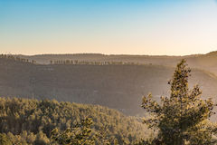 Winter sunset in Israel, mount Eitan. With trees and blue sky Royalty Free Stock Image