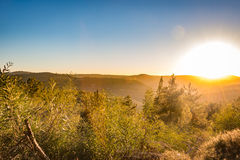 Winter sunset in Israel, mount Eitan. With trees and blue sky Royalty Free Stock Images